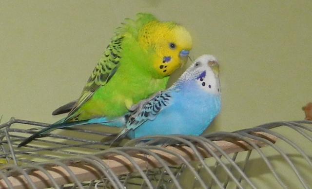Мужские имена для попугая