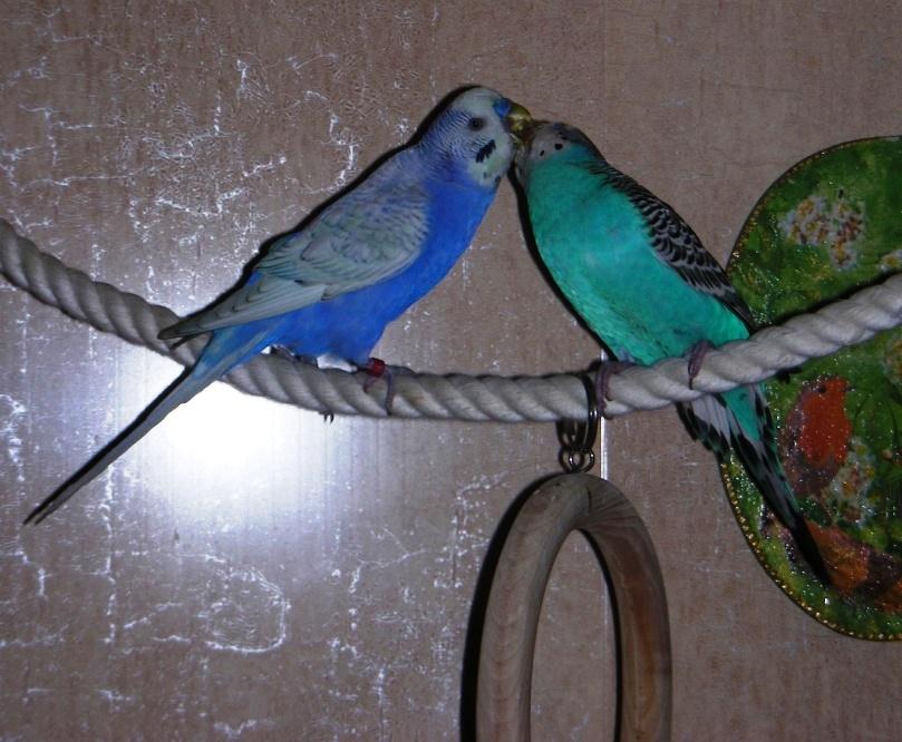 попугаев знакомство