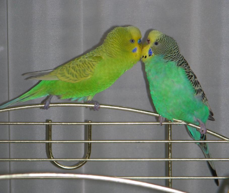 Знакомства попугаев ишим знакомства