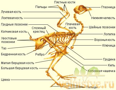 Коленные суставы у воробьев тромб в коленном суставе симптомы